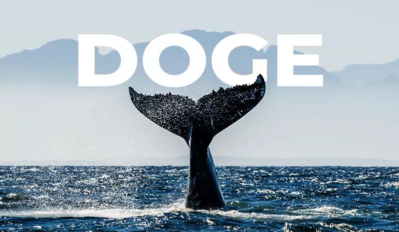 نهنگ دوج کوین